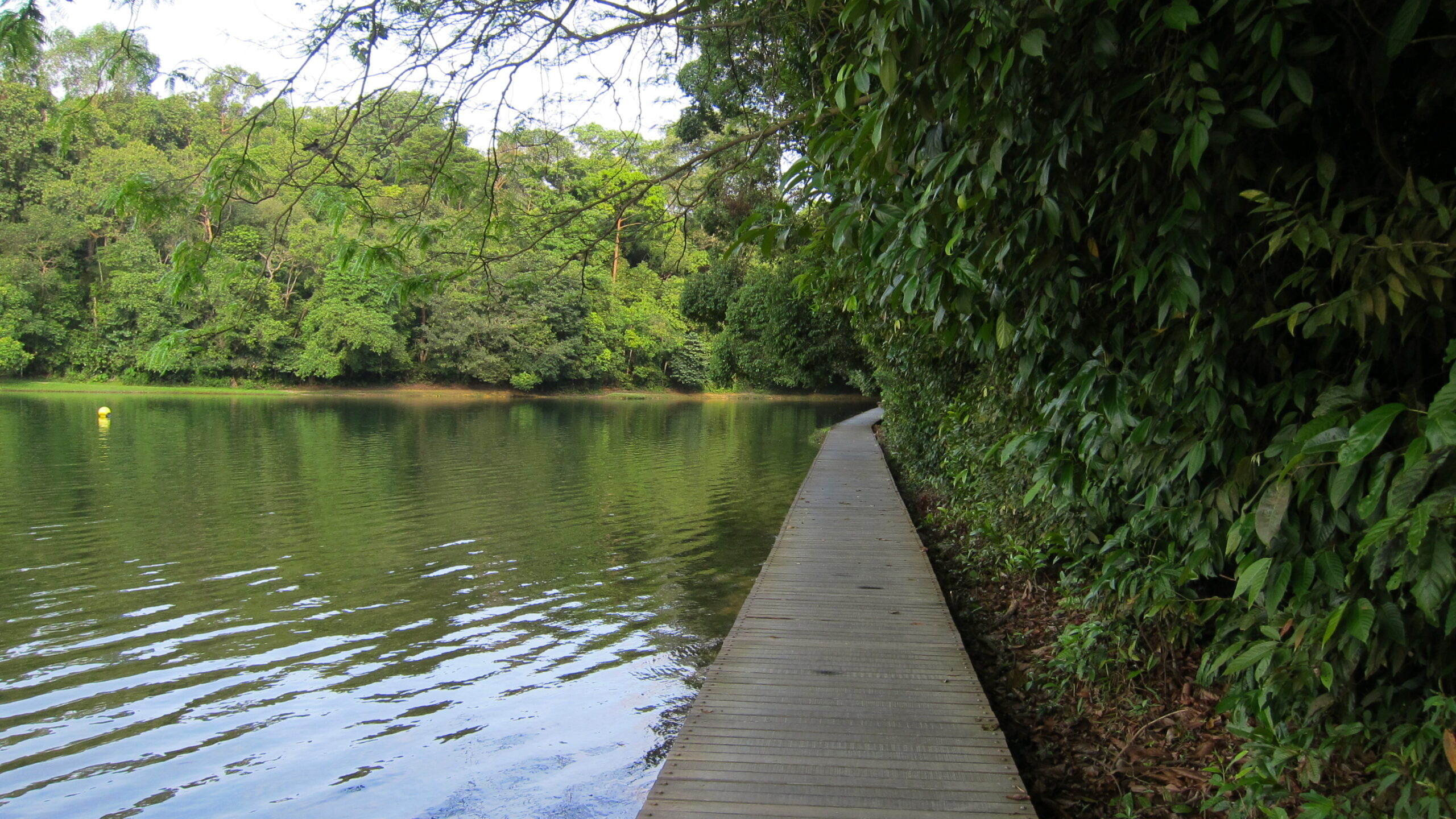 MacRitchie_Reservoir_Park_-_panoramio_(14)